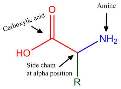 α-amino acid