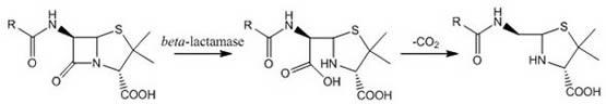 β-lactamase reaction