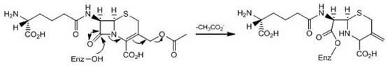 Cephalosporin C Mechanism