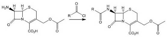 Cephalosporin reacting with Acid Chlorides