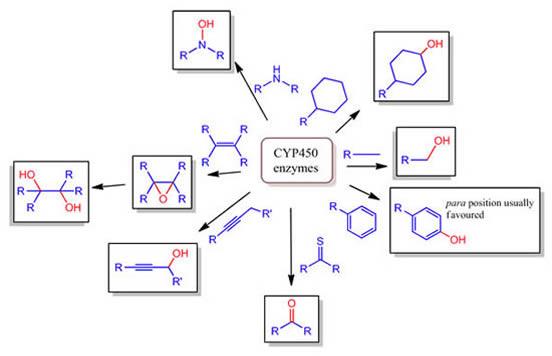 CYP450 Enzymes