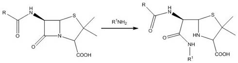 Penicillin reacting with Amines