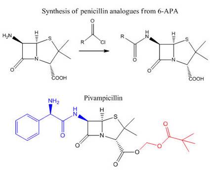 Semisynthetic Derivatives of Penicillin