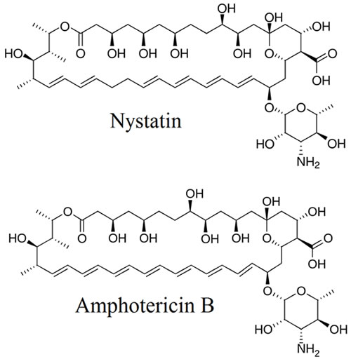 Nystatin & Amphotericin B