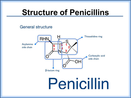 Structure of Penicillins