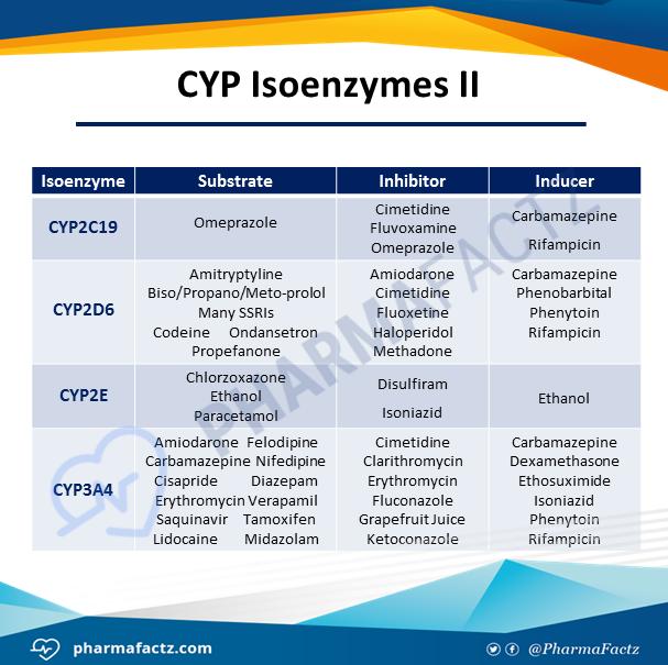 CYP Isoenzymes II