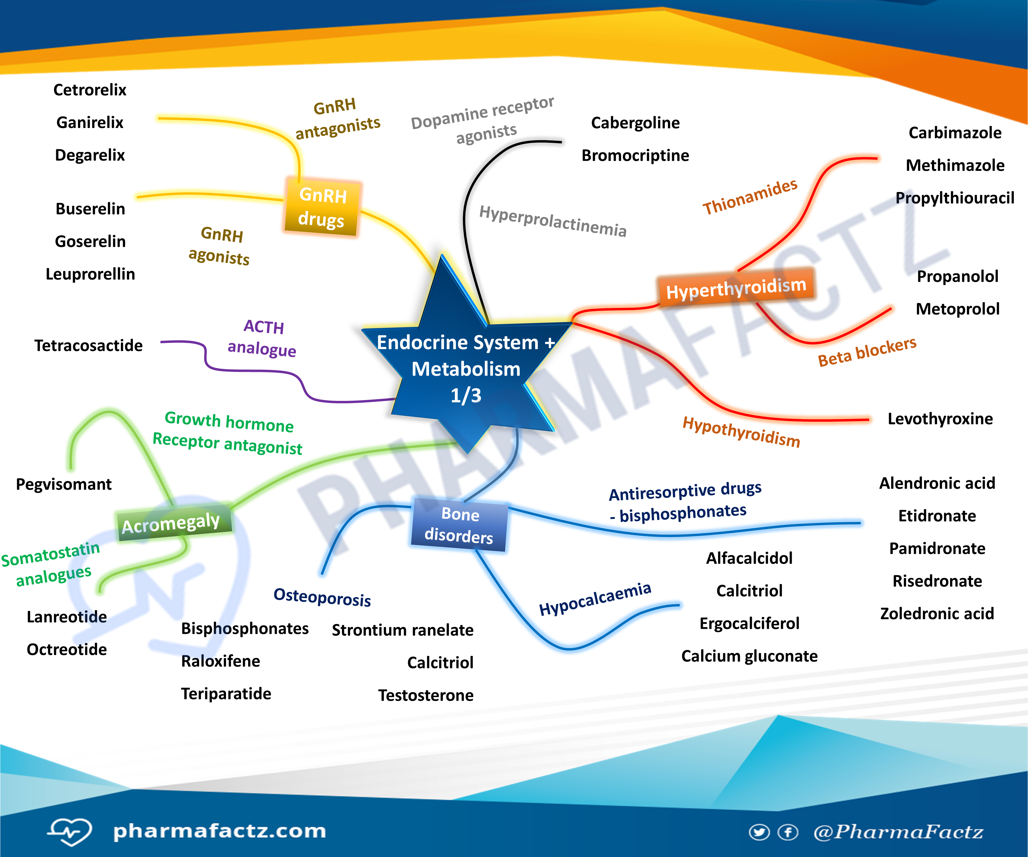 Endocrine System & Metabolism Mindmap 1