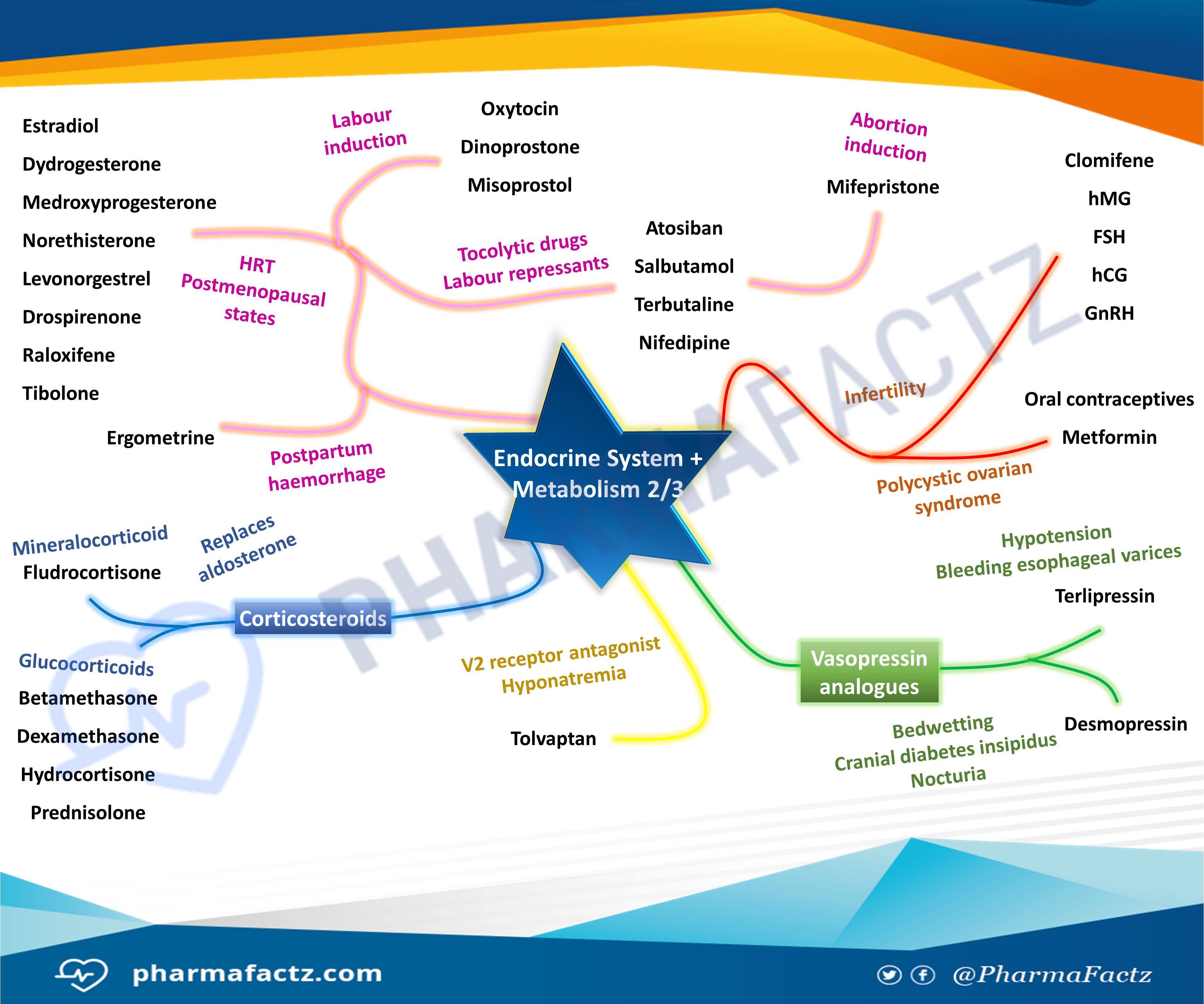 Endocrine System & Metabolism Mindmap 2