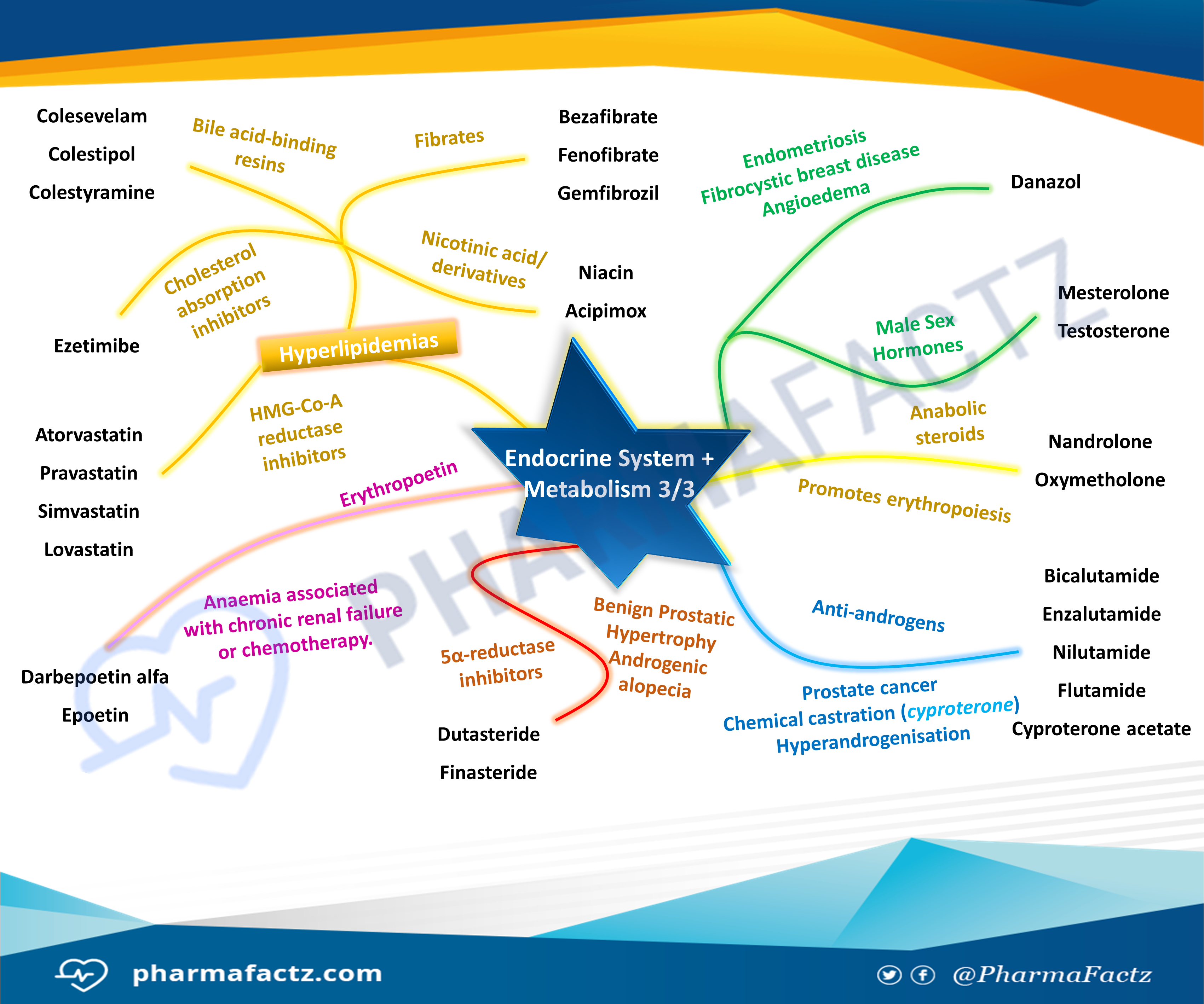 Endocrine System & Metabolism Mindmap 3