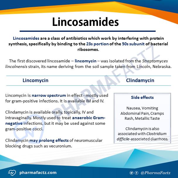 Lincosamides