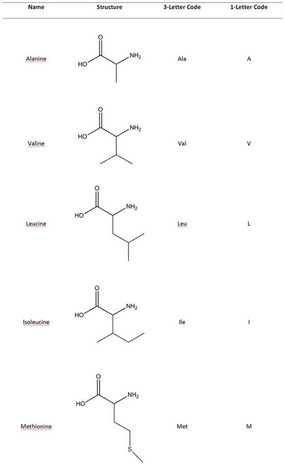 Amino Acids with Hydrophobic Side Chains