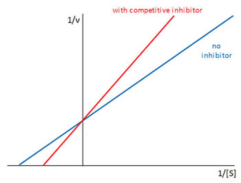 Competitive Inhibitor Graph