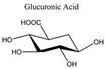 Glucuronic Acid