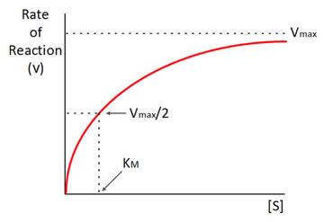 Michaelis-Menten Model Graph