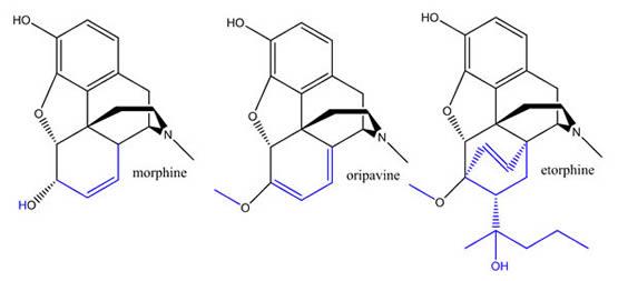 Morphine, Oripavine Etorphine