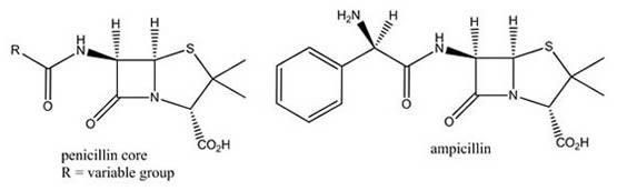 Penicillium Ampicillin